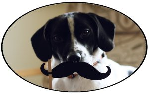 Just a dog with a mustache